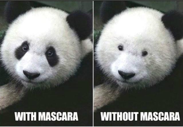 neztfundstueck panda